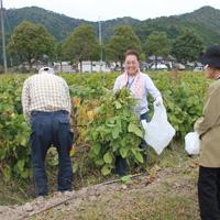 写真:大興奮の黒豆収穫体験
