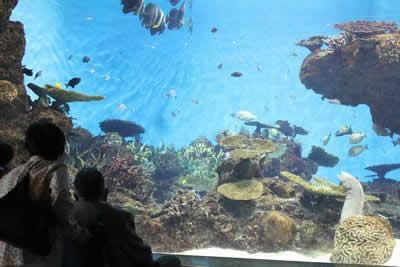 写真:鹿児島水族館