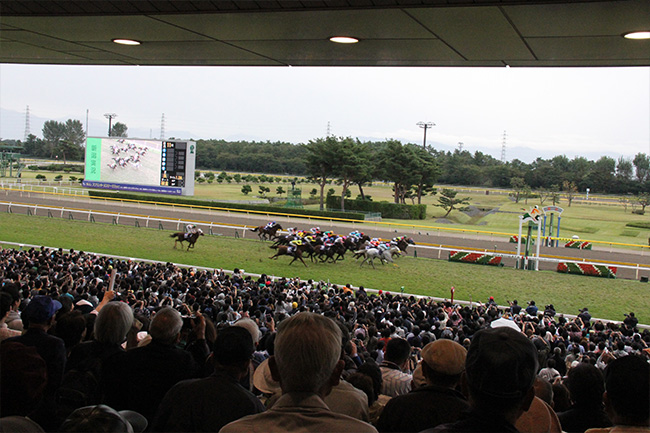 写真:人でうめつくされた新潟競馬場
