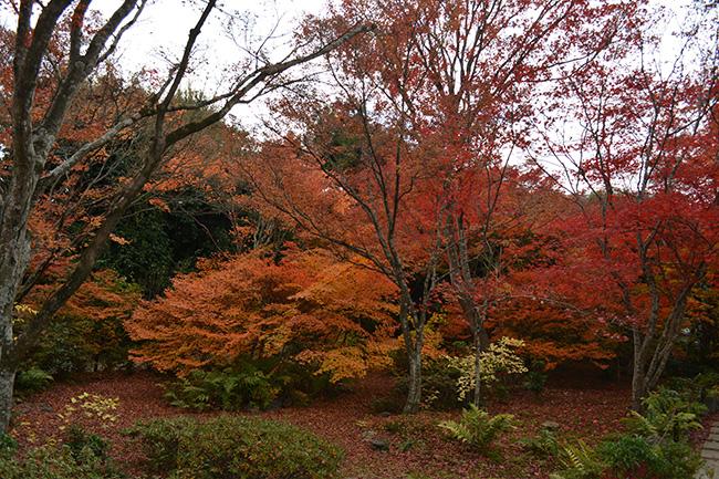 写真:紅葉の名所宝筐院