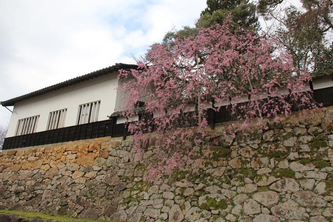 写真:桜と駅