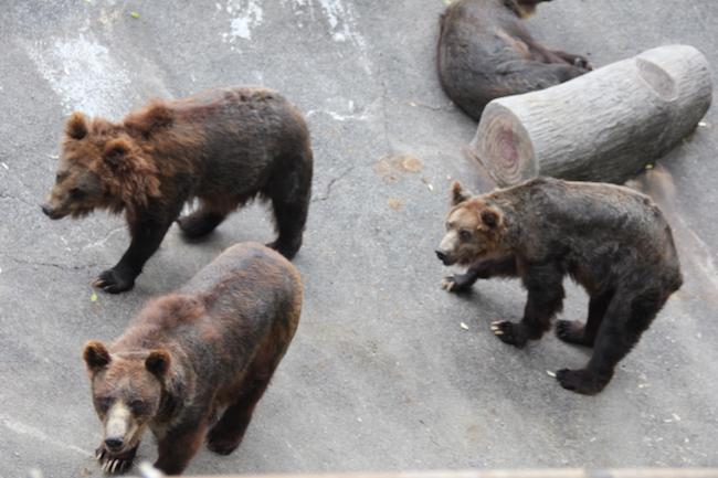 写真:三びきの熊