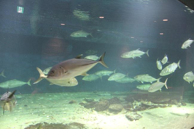 写真:水槽の中に泳ぐ魚たち