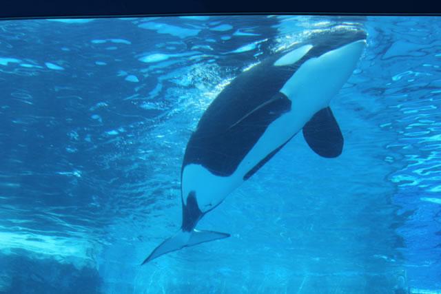 写真:名古屋港水族館