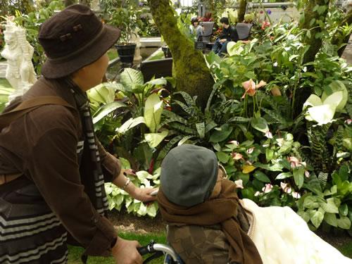 写真:家族が車いすを押しながら、お客様が花を観賞