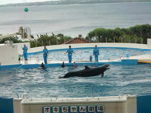 写真:美ら海水族館のイルカショーを観覧