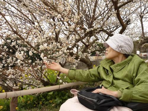 写真:お客様が梅の花を愛でている
