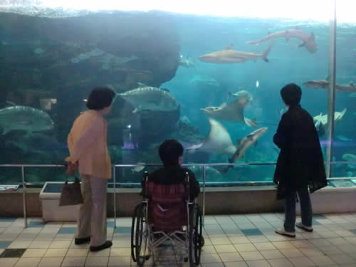 写真:須磨海浜水族園の大きな水槽