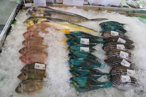 写真:沖縄の新鮮な魚